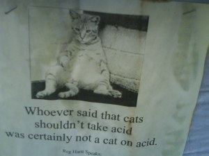 A cat on acid - city wisdom at its best